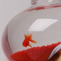 glass fish bowl | הבית של דג הזהב